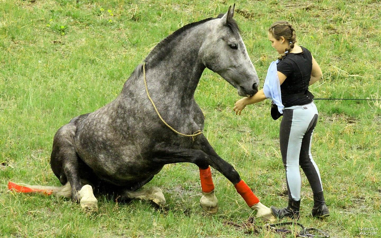 Все для лошадей своими руками