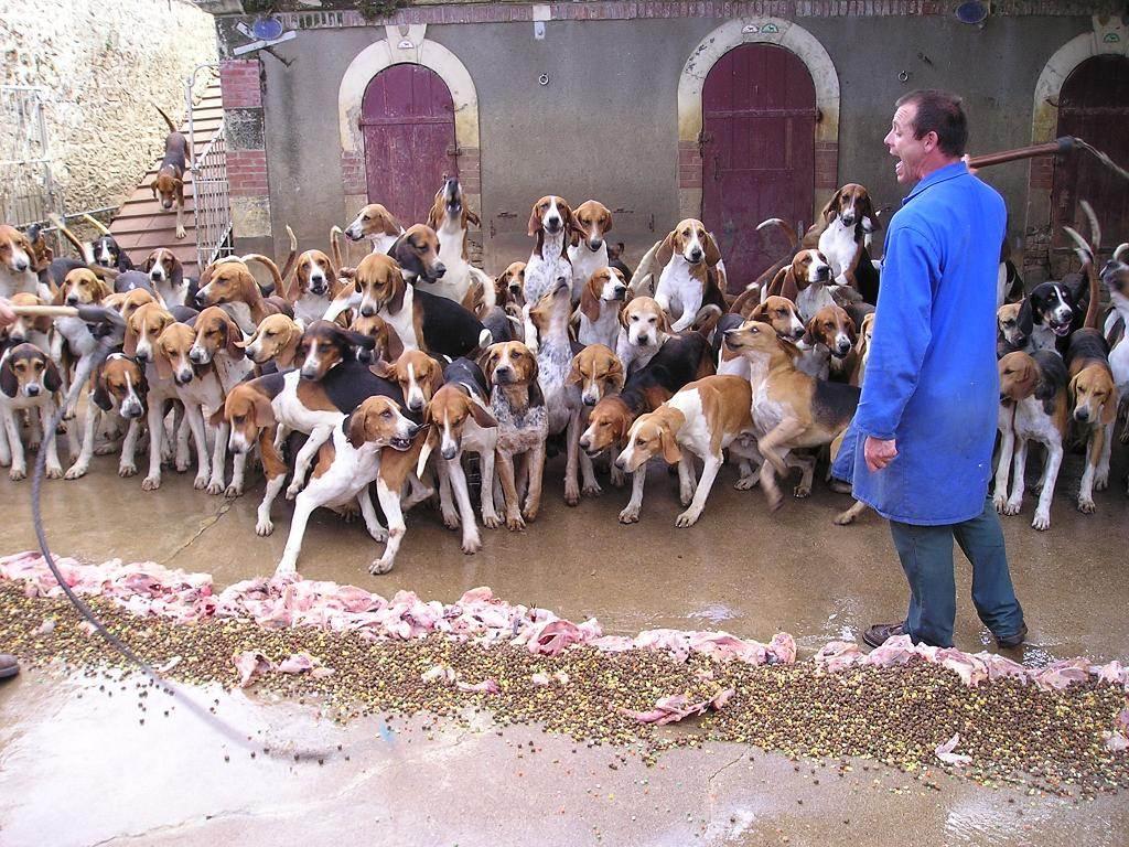 ежика замок собак картинки наступают жизни