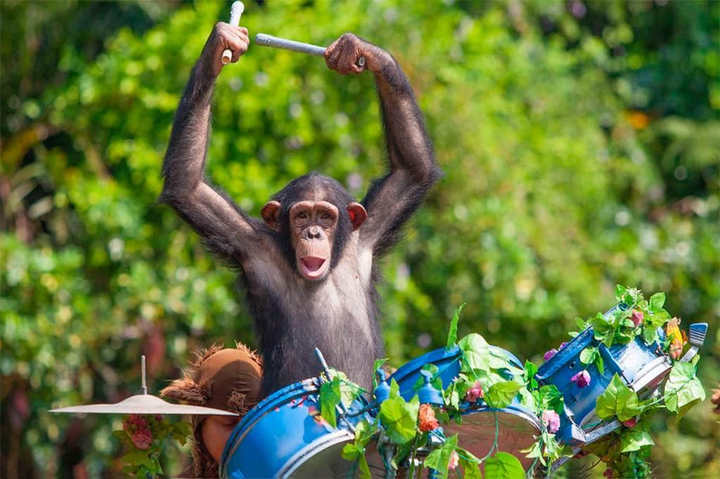 Смешные картинки обезьян с днем рождения, картинки подарок