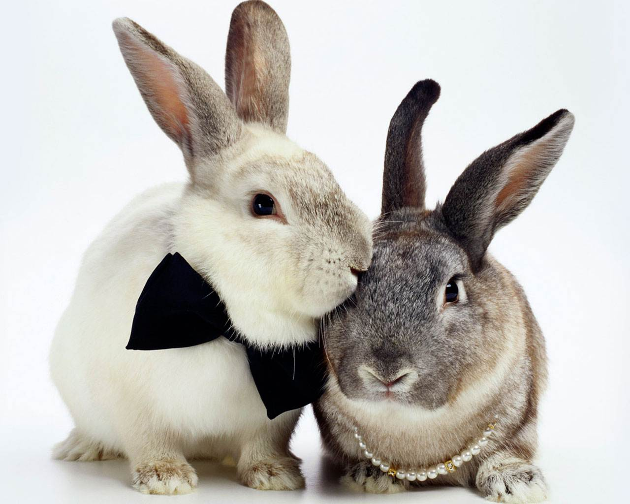Секс с кроликами 8 фотография