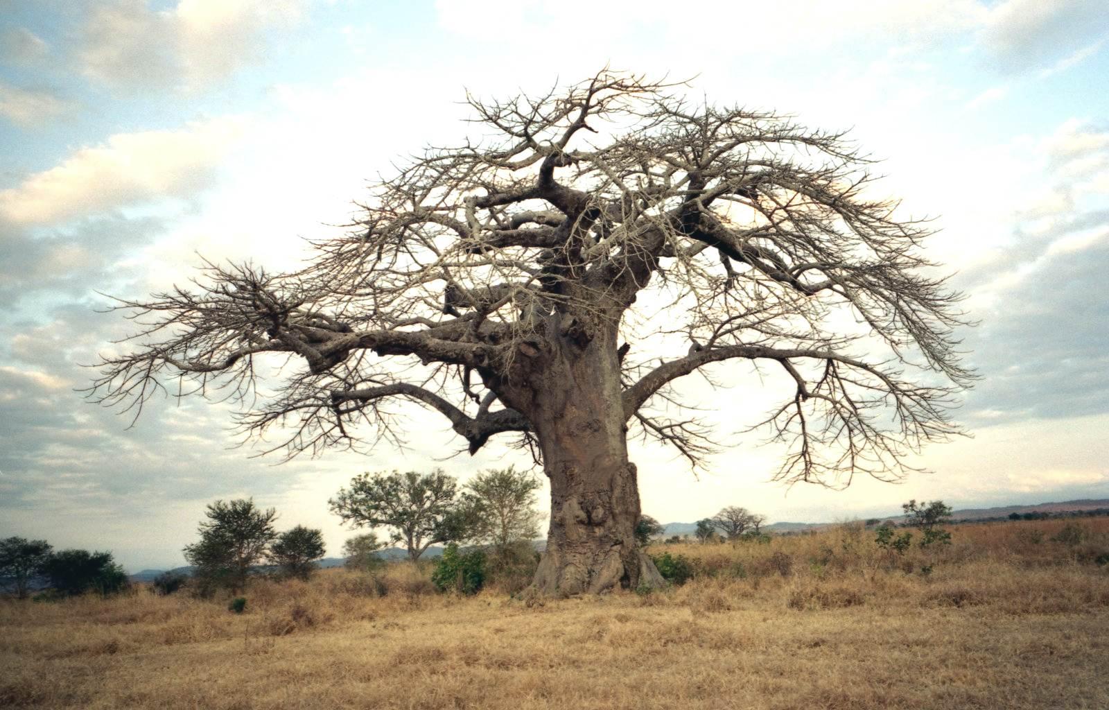 Секс на дереву 11 фотография