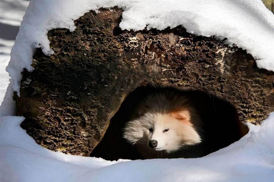 квадратик картинки спящих животных зимой училась, занималась комсомольской
