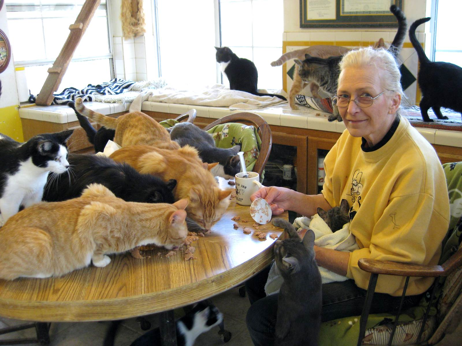 There Was an Old Lady Who Swallowed a Fly - Wikipedia Old cat lady pictures